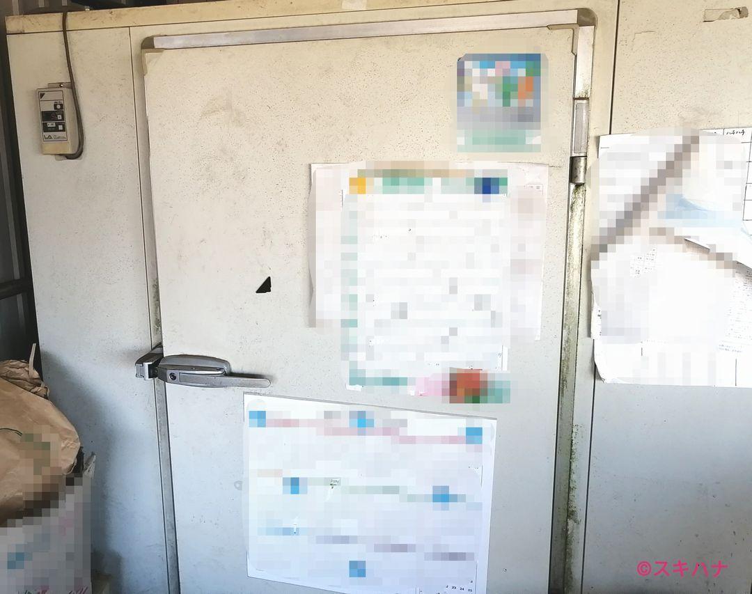 ラナンキュラスの冷蔵処理に使う冷蔵庫