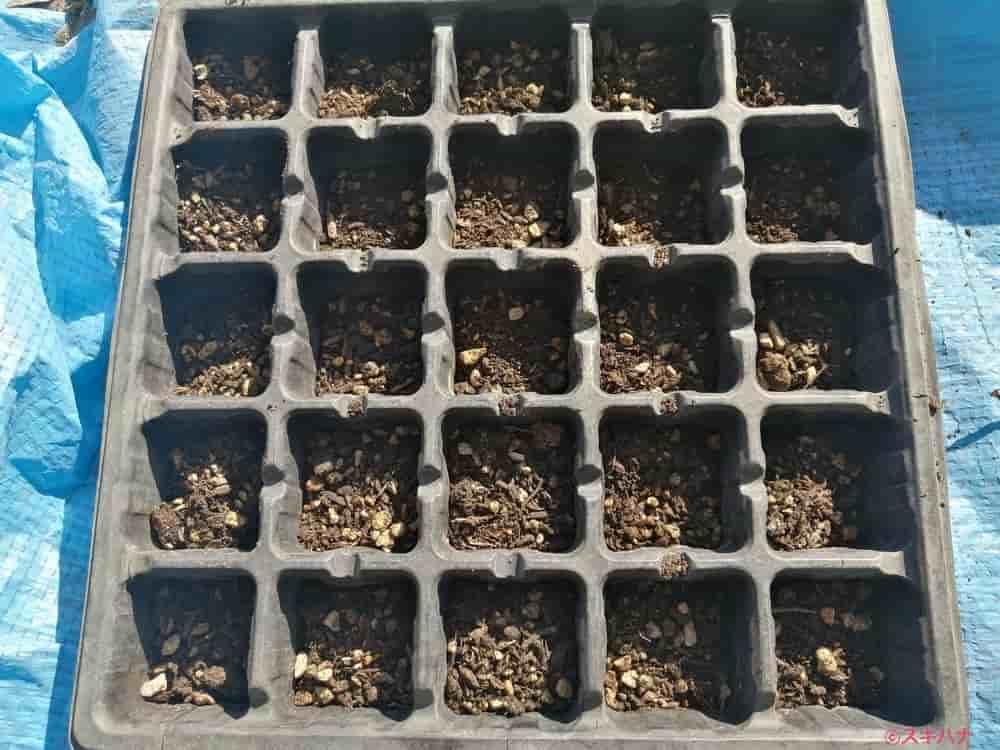 種まき用土を入れた育苗トレイ